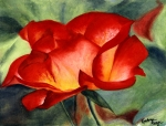 Rose by Kat Lange